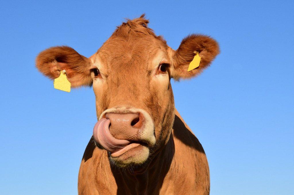 latte-mammiferi